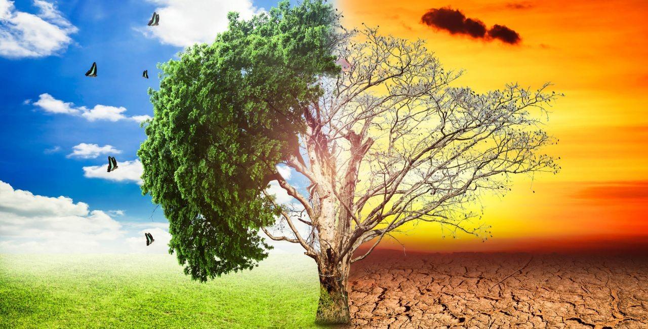 Χαρακτηριστική εικόνα της κλιματικής αλλαγής με ένα δέντρο μισό πράσινο και μισό καμένο